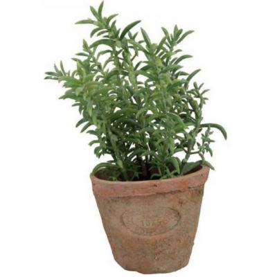 Műnövény dekoráció, kakukkfű